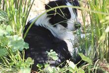 TAKES, Hund, Border Collie in Spanien - Bild 10