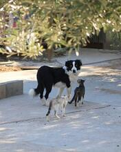 TAKES, Hund, Border Collie in Spanien - Bild 11