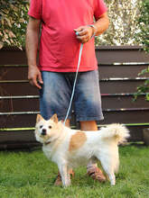 PATRIK, Hund, Spitz-Mix in Slowakische Republik - Bild 4