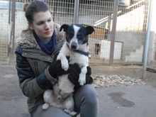 FRICI, Hund, Jack Russell Terrier-Mix in Magdeburg - Bild 1