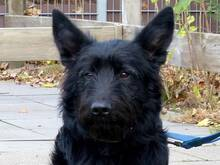 FRIDOLIN, Hund, Strobel Mix in Hamburg
