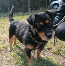 MONSIEURMILLI, Hund, Terrier-Mix in Kroatien - Bild 6