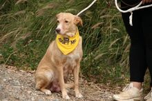 JULIETE, Hund, Podenco-Mix in Spanien - Bild 6