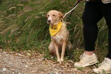 JULIETE, Hund, Podenco-Mix in Spanien - Bild 7