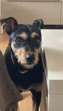 COCO, Hund, Terrier-Mix in Spanien - Bild 1