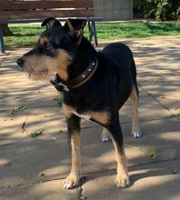 COCO, Hund, Terrier-Mix in Spanien - Bild 2
