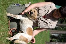 LUCKY, Hund, Parson Russell Terrier-Mix in Neuhausen - Bild 6