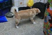 COLIN, Hund, Podenco-Mix in Spanien - Bild 15