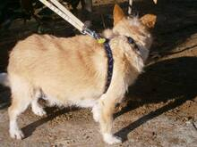 COLIN, Hund, Podenco-Mix in Spanien - Bild 19