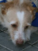 COLIN, Hund, Podenco-Mix in Spanien - Bild 22