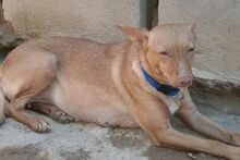 MARY, Hund, Podenco-Mix in Spanien - Bild 6