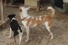 EVE, Hund, Podenco in Spanien - Bild 5