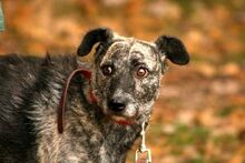 RONJA, Hund, Terrier-Mix in Neuhausen - Bild 1