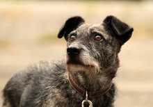 RONJA, Hund, Terrier-Mix in Neuhausen - Bild 2