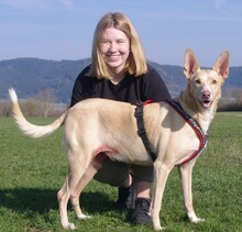 LUIS, Hund, Podenco-Mix in Kronach - Bild 13