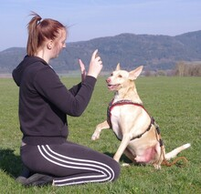 LUIS, Hund, Podenco-Mix in Kronach - Bild 26