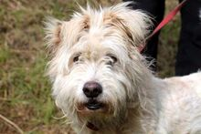 LUMPI, Hund, Puli-Mix in Neuhausen - Bild 1