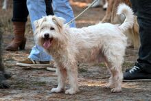 LUMPI, Hund, Puli-Mix in Neuhausen - Bild 4