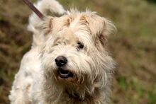 LUMPI, Hund, Puli-Mix in Neuhausen - Bild 7