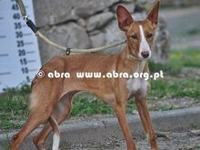 KATE, Hund, Mischlingshund in Portugal - Bild 2