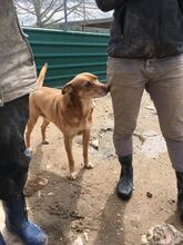 SUNNO, Hund, Podenco-Mix in Spanien - Bild 4