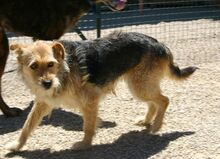 MURRY, Hund, Terrier-Mix in Italien - Bild 3