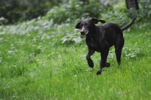 JULE, Hund, Pointer in Witten - Bild 7