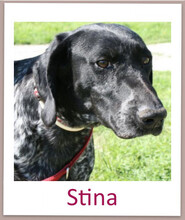 STINA, Hund, Pointer in Zypern - Bild 6