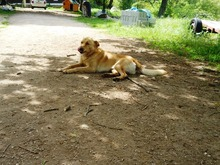 PETERS, Hund, Mischlingshund in Polen - Bild 3