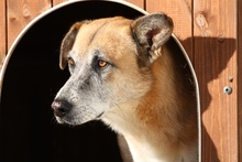 CASTOR, Hund, Malinois-Mix in Italien - Bild 11