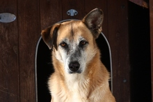 CASTOR, Hund, Malinois-Mix in Italien - Bild 7