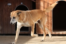 CASTOR, Hund, Malinois-Mix in Italien - Bild 8