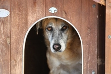 CASTOR, Hund, Malinois-Mix in Italien - Bild 9