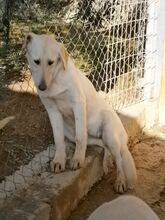 ESTEICY, Hund, Labrador-Mix in Spanien - Bild 15