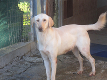 ESTEICY, Hund, Labrador-Mix in Spanien - Bild 19