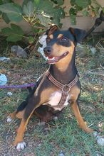 MAMMY, Hund, Pinscher-Mix in Spanien - Bild 6