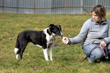 FLY, Hund, Border Collie-Mix in Neuhausen - Bild 3