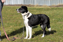 FLY, Hund, Border Collie-Mix in Neuhausen - Bild 6