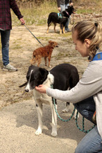 FLY, Hund, Border Collie-Mix in Neuhausen - Bild 7