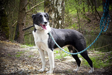 FLY, Hund, Border Collie-Mix in Neuhausen - Bild 8