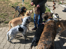 SELLI, Hund, Mischlingshund in Eckental - Bild 5